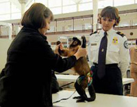 English: An image of a TSA screener inspecting...