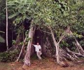 Amazon Rainforest Buttress