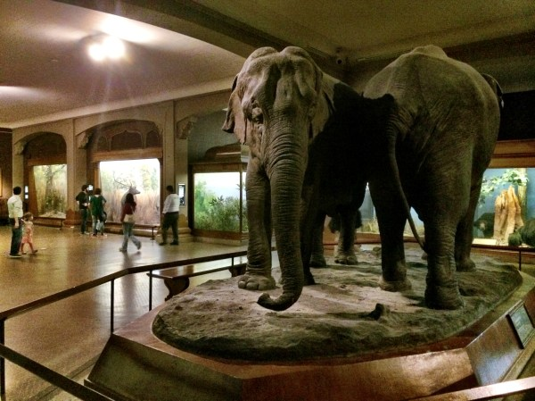 African American Museum of Natural History Hall of Mammals
