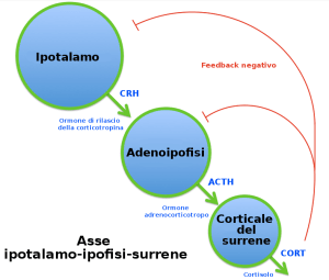 File:HPA Axis Diagram (Brian M Sweis 2012)ITpng