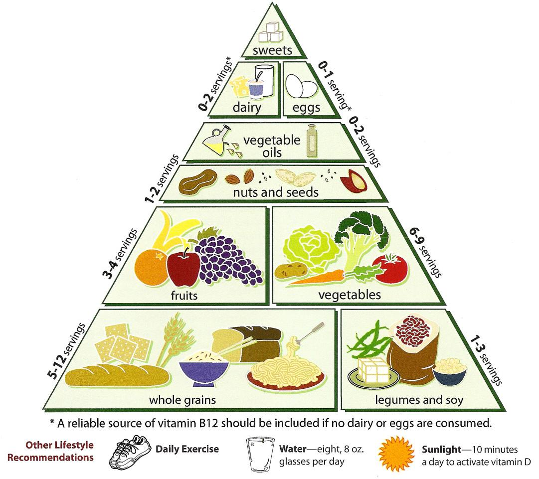 new food pyramid diagram parts of a tree vegetarian diet - wikipedia