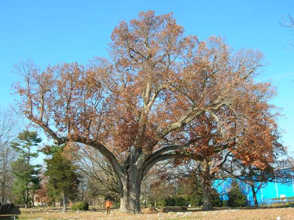 The expansion of the oak tree ltd - Essay Sample