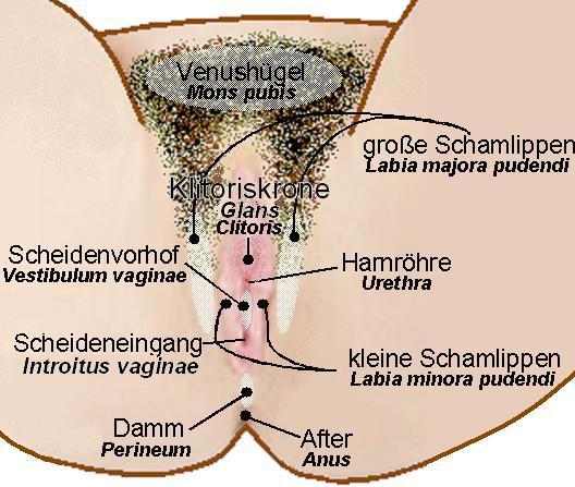 file vulva description jpg