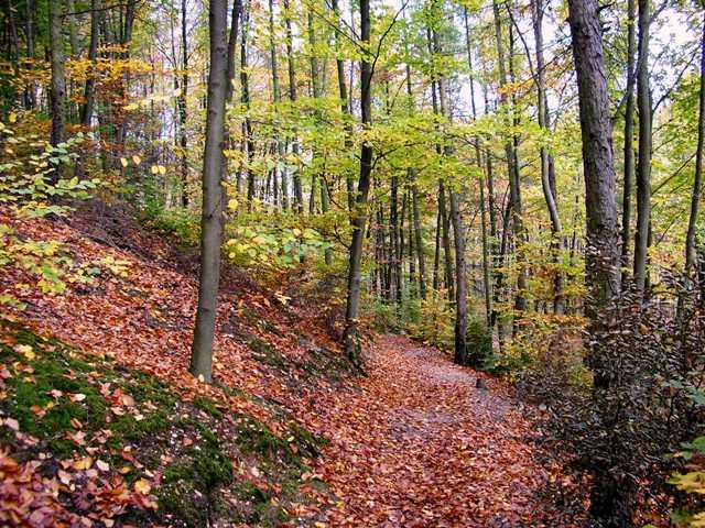 File:Niederaußem Waldweg.JPG