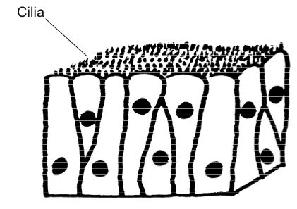 The Cell World: Function of Cells
