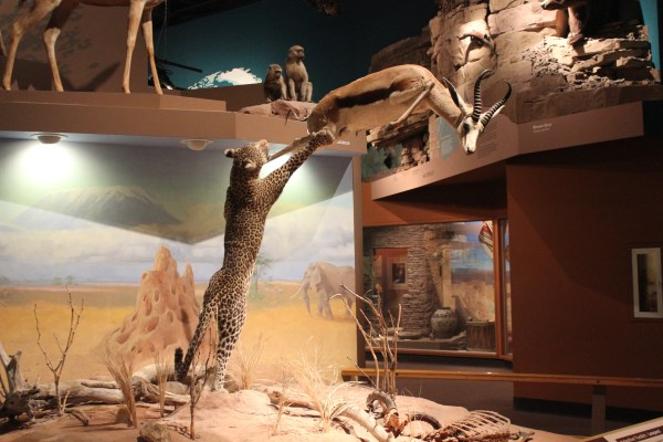 File Permanent Exhitbition Cleveland Museum Of Natural - Wikimedia Commons