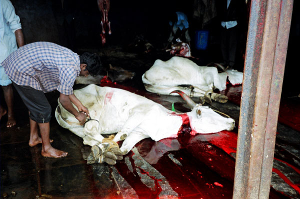 https://i0.wp.com/upload.wikimedia.org/wikipedia/commons/1/1b/Cow_slaughter.jpg