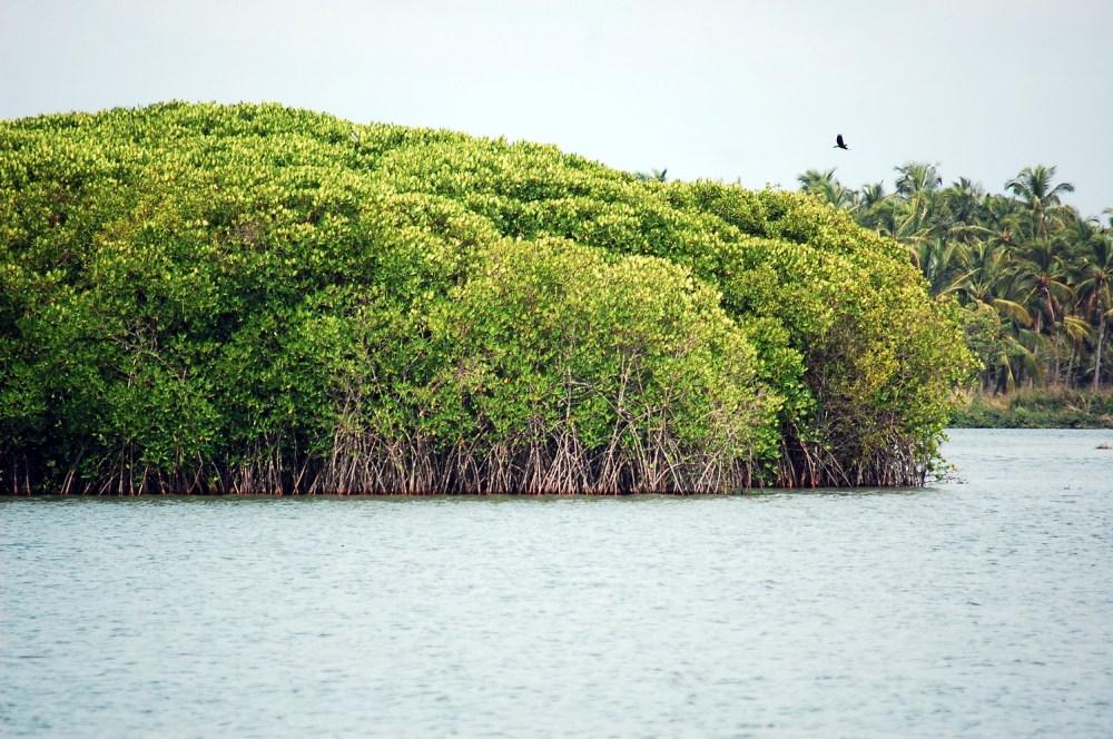 medium resolution of contoh aliran energi dan rantai makanan pada ekosistem mangrove