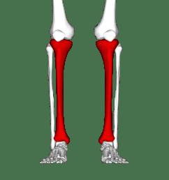 unlabeled leg diagram [ 4500 x 4500 Pixel ]