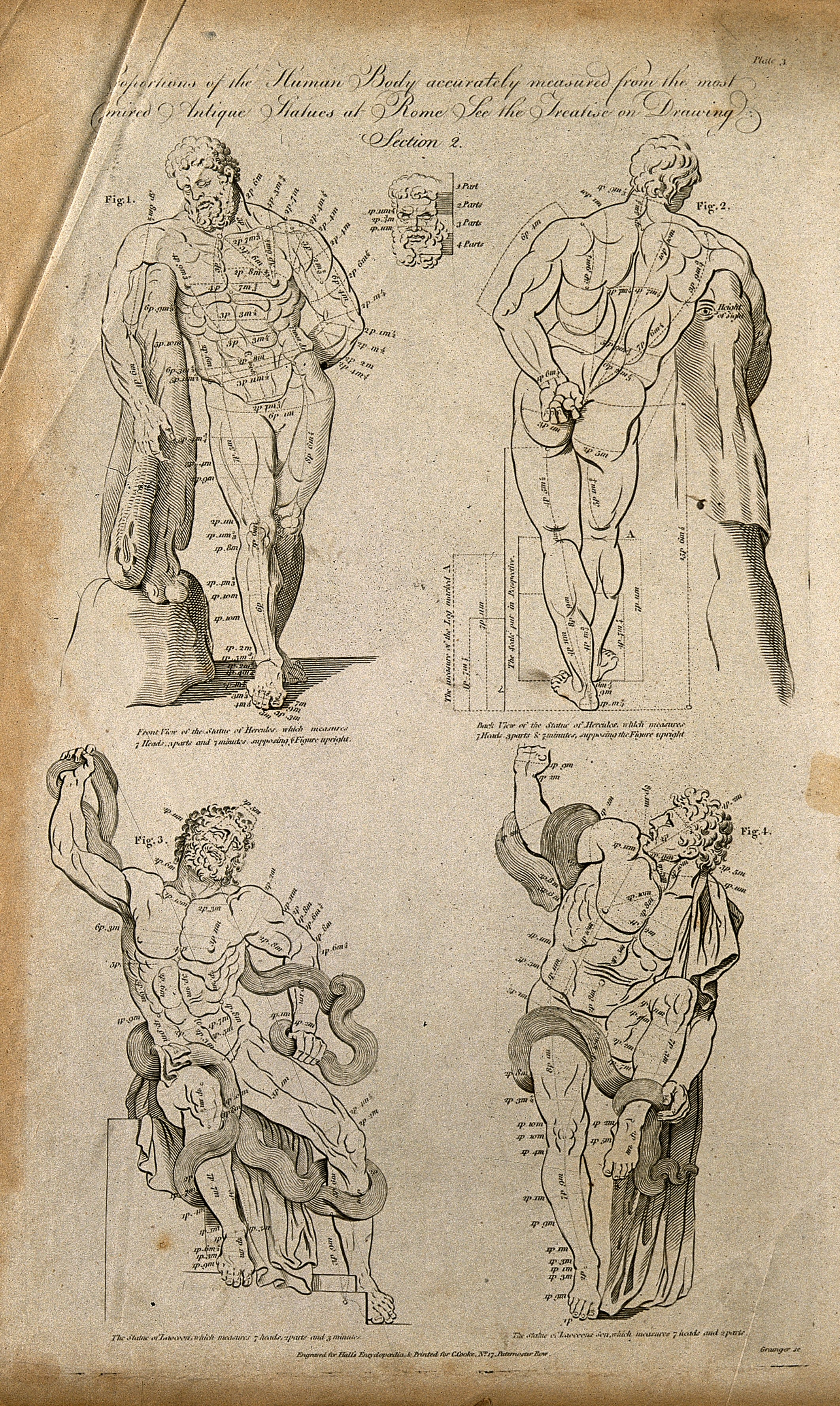 File Proportions Of The Human Body Four Figures Of The