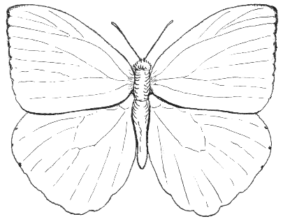 File:Butterfly1 (PSF).png