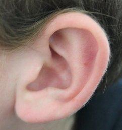 ear [ 997 x 1600 Pixel ]