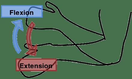 forearm bones diagram 2000 ford taurus belt introduction to regional anatomy/lesson 4 - wikiversity