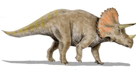 File:Triceratops BW.jpg