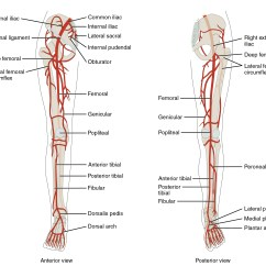 Lower Leg Nerve Diagram Hydraulic Fracturing Of Major Nerves In Free Wiring For You File 2129ab Limb Arteries Anterior Posterior Jpg Hip And Extremity