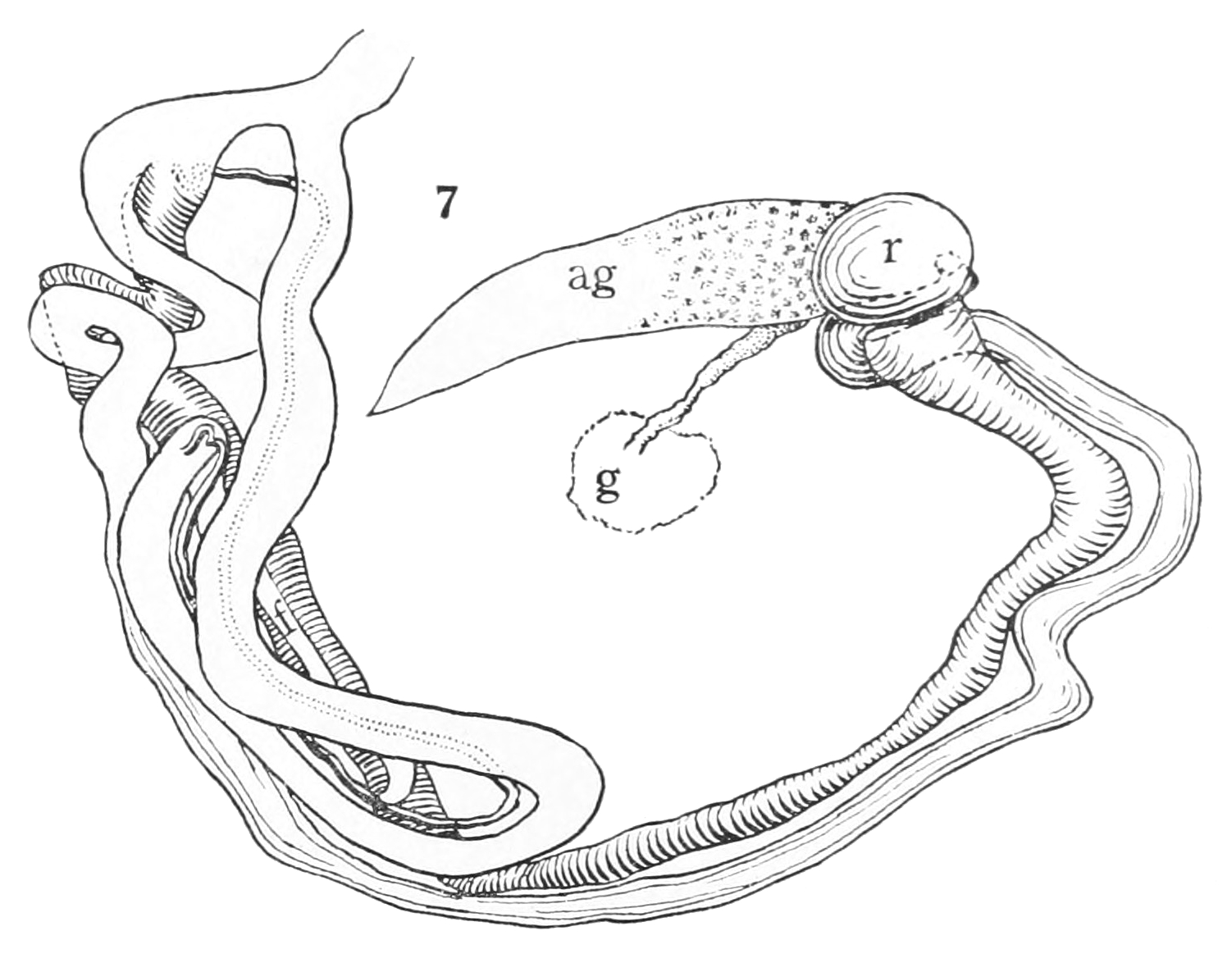 Reproductive System Coloring Pages