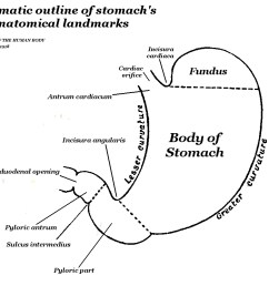 diagram of fundu [ 1054 x 894 Pixel ]