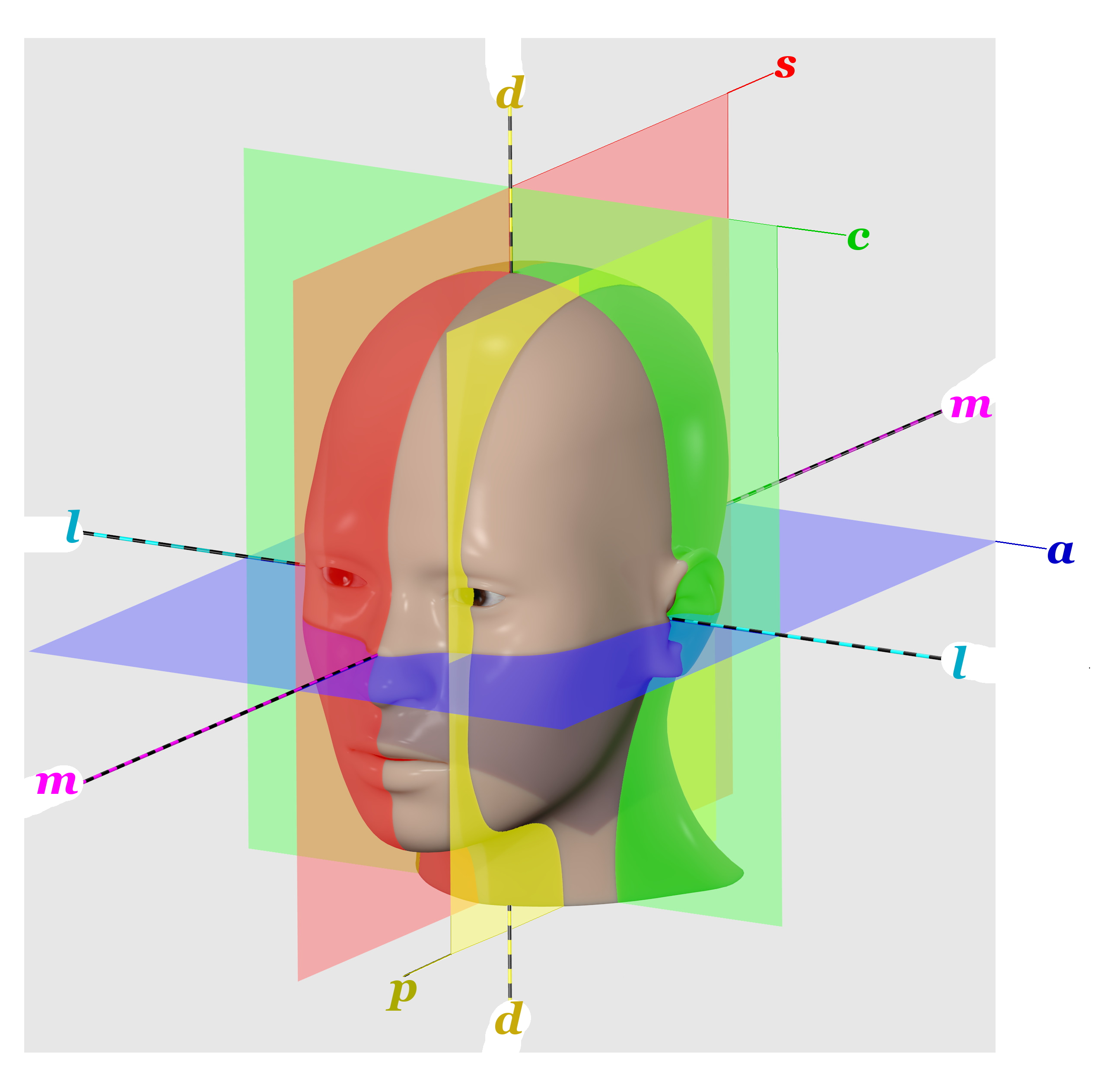 File Human Head Anatomical Planes Letter Annotations