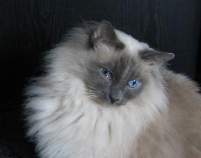 Suche  Magical Cats Forum