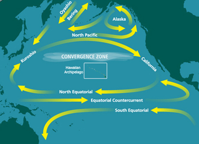 North Pacific Subtropical Convergence Zone Previously Secret 1955 Government Report Concluded that Ocean May Not Adequately Dilute Radiation from Nuclear Accidents