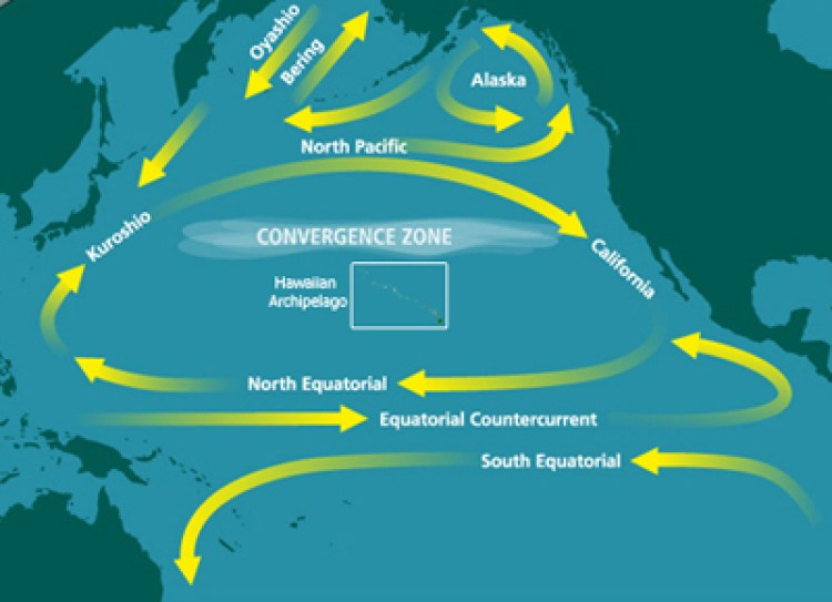 North Pacific Subtropical Convergence Zone FDA Refuses to Test Fish for Radioactivity ... Government Pretends Radioactive Fish Is Safe