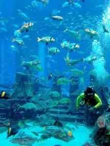 File Atlantis Dubai - Wikimedia Commons