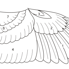 Eagle Wing Diagram Wiring For House Db South Africa File Birdwingfeathersketch Png Wikimedia Commons