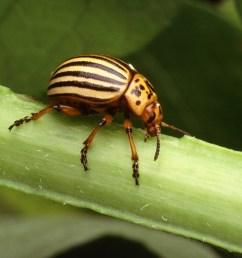 beetle body part diagram labeled [ 2790 x 1811 Pixel ]