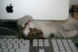 Apple computer cat