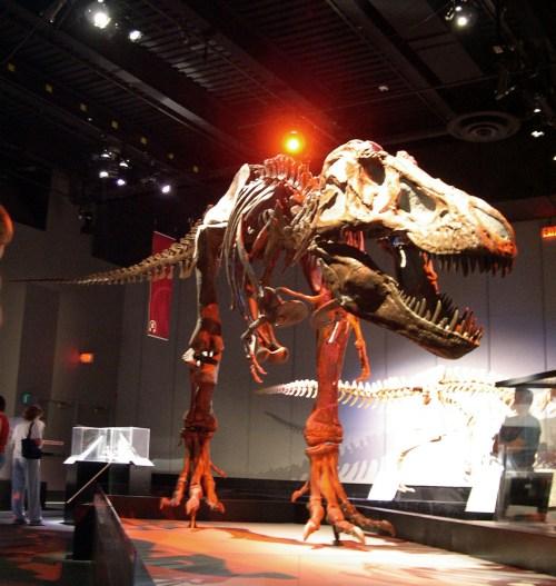 https://i0.wp.com/upload.wikimedia.org/wikipedia/commons/2/22/Dinosaur_skeleton_at_Tyrrell.jpg?resize=500%2C527&ssl=1