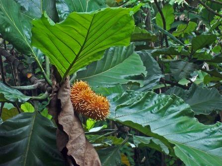 Benda pohon  Wikipedia bahasa Indonesia ensiklopedia bebas