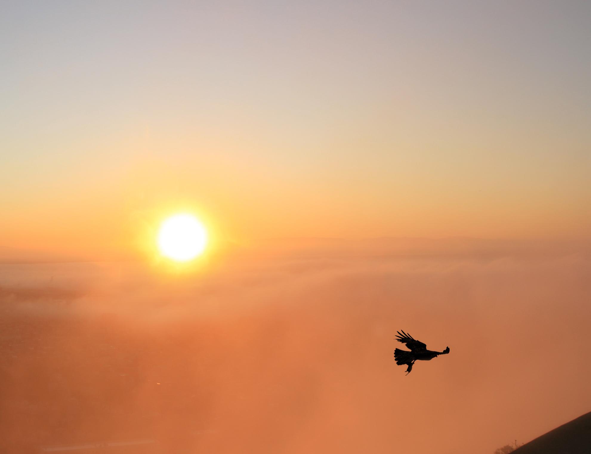 English: Foggy sunrise in San Francisco and Bu...