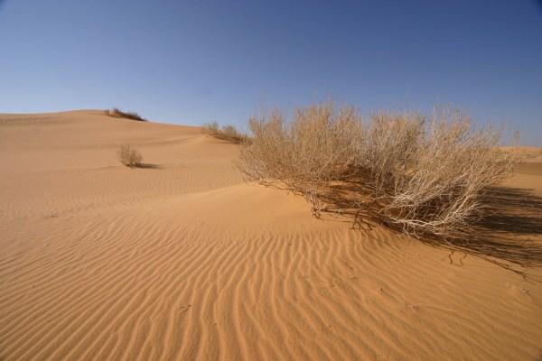 Ever wonder what desert looks like? Visit Red Sand Dunes! Source: Wikimedia