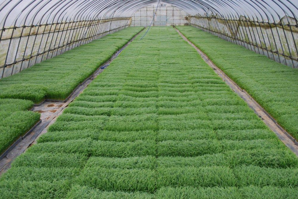 medium resolution of seedbed