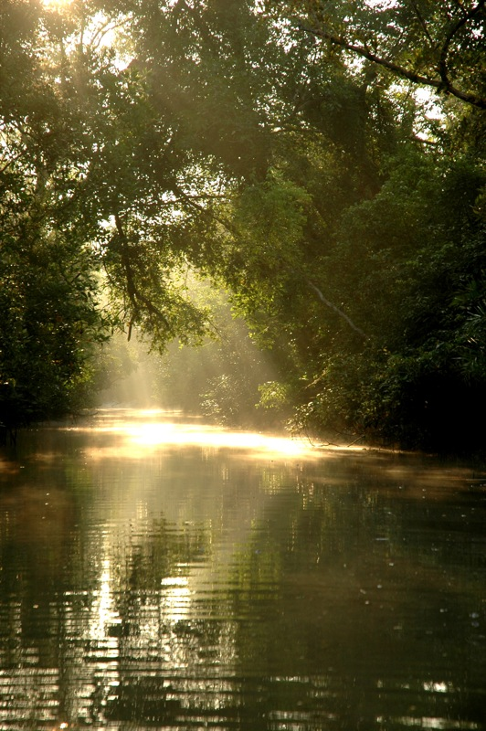 Sun in Sunderbans.jpg
