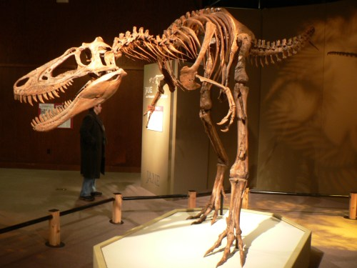 https://i0.wp.com/upload.wikimedia.org/wikipedia/commons/2/26/Jane_Tyrannosaurus.jpg?resize=500%2C375&ssl=1