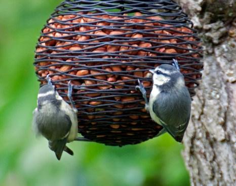 Bird feeding tips winter