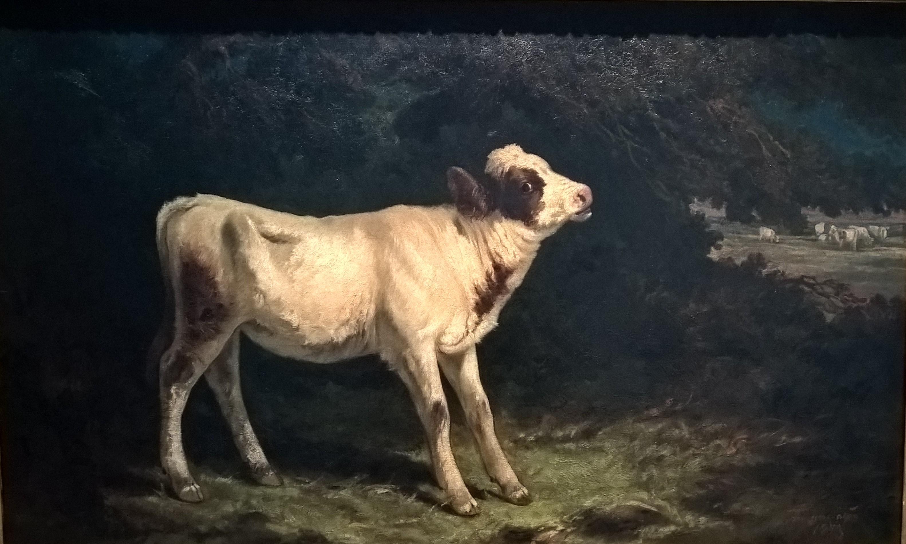 Ficheiro:O vitelo.jpg