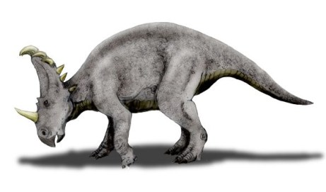 File:Sinoceratops NT.jpg