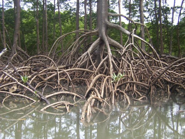 File Roots - Wikimedia Commons