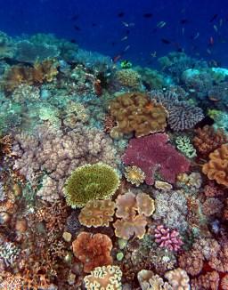 Timor Coral Reef