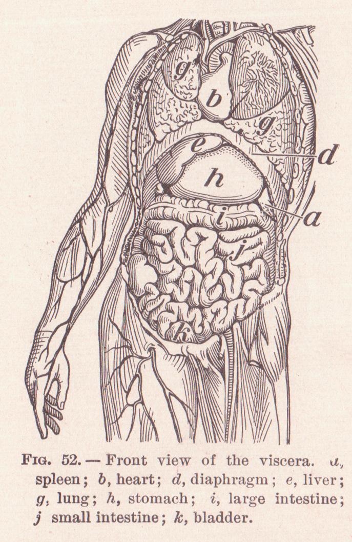 anatomy skull diagram top radiator fan relay wiring for 2005 caravan anatomical terms of location - wikipedia