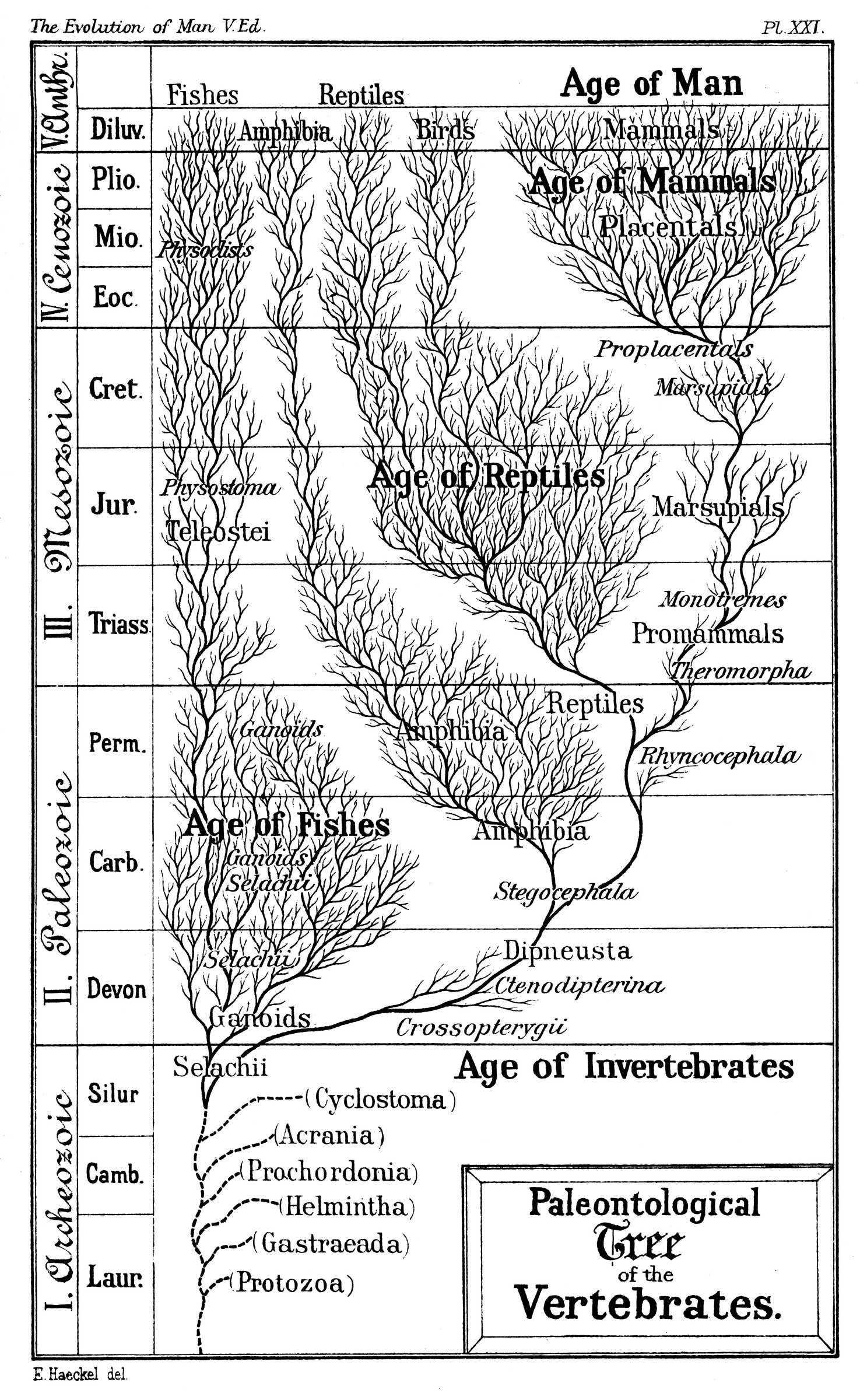 Evolutie Biologie