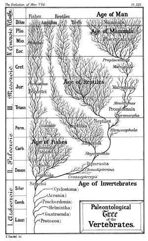 Evolutie (biologie)  Wikipedia
