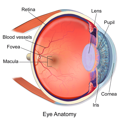 small resolution of macula of retina