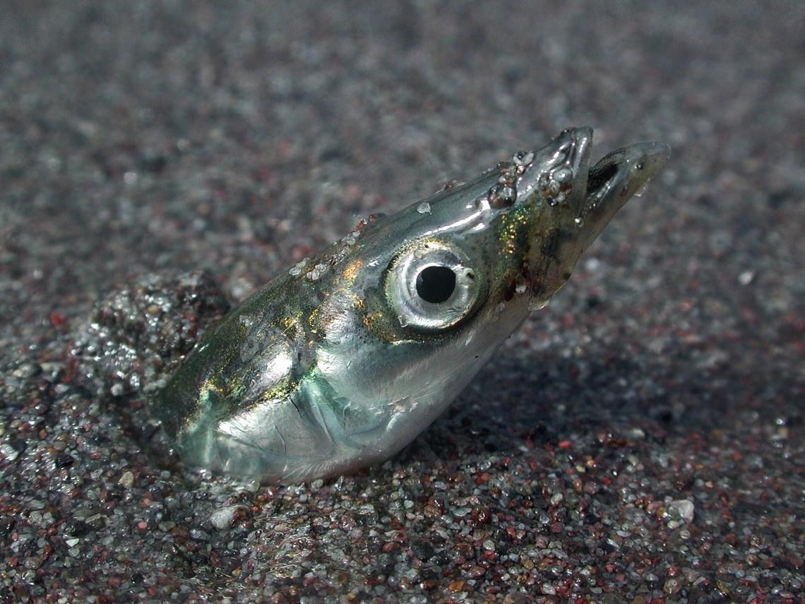 Image Result For Eels