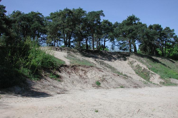 Inland dune  Wikipedia
