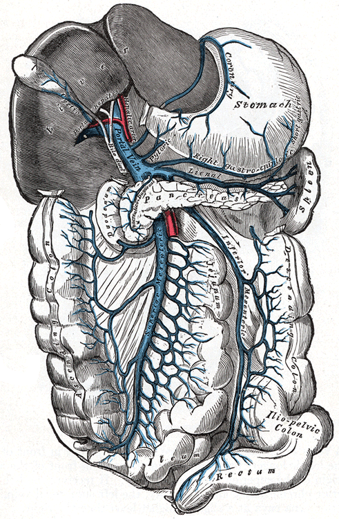 diagram location lymph nodes franklin electric submersible motor wiring portal vein - wikipedia