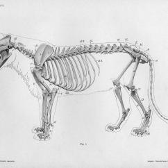 Snow Leopard Anatomy Diagram Attwood Sahara Bilge Pump Wiring Bibliodyssey Handbook Of Animal