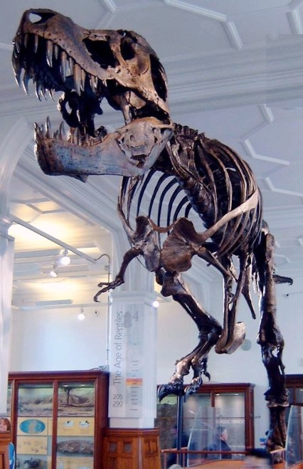 https://i0.wp.com/upload.wikimedia.org/wikipedia/commons/3/33/Stan_the_Trex_at_Manchester_Museum.jpg?resize=426%2C659&ssl=1